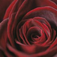 Het Kenmerk Van Waarheid Is Liefde, Het Kenmerk Van Liefde Is Waarheid
